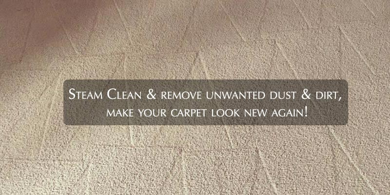 Steam Clean & remove unwanted dust & dirt, make your carpet look new again!